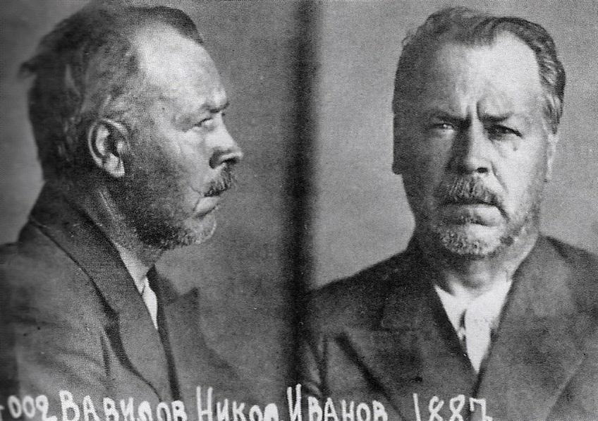 Nikolaj Vavilov i NKDV:s fängelse